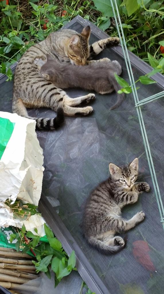 three cats 9-17-15